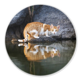 Cat Reflection Pond Water Funny Photo - Decorative Ceramic Knob