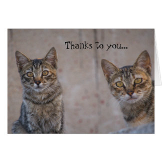 Cat Rescue Kitty Lover Thank You Card