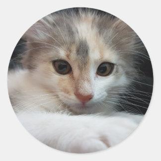 cat round sticker