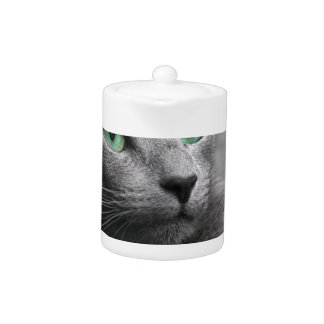 Cat Russian Blue Look Eyes Gray Pet