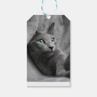 Cat Russian Blue Look Eyes Gray Pet Gift Tags