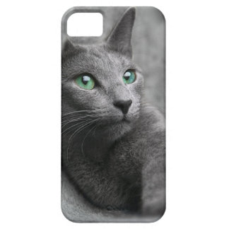 Cat Russian Blue Look Eyes Gray Pet iPhone 5 Covers