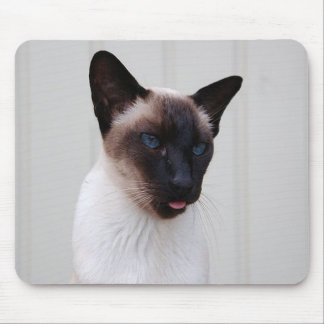 Cat Siamese Portrait Mouse Pad