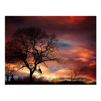 Cat Silhouette in Tree at Sunset Postcard