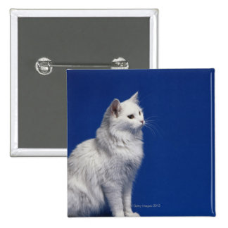 Cat sitting against blue background 2 inch square button