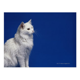 Cat sitting against blue background postcard