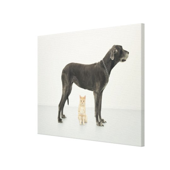 Cat sitting beneath Great Dane Canvas Print