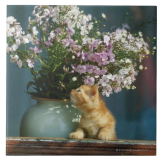 Cat sitting besides flower vase on window sill tile
