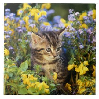 Cat sitting in flower garden tile