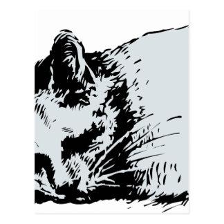 cat sleep postcard