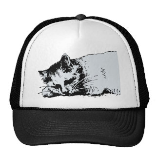 cat sleep trucker hat
