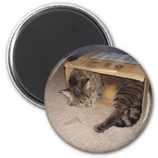 Cat sleeping in box magnet