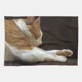 Cat sleeping on sofa kitchen towel