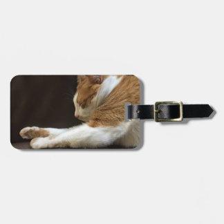 Cat sleeping on sofa luggage tag