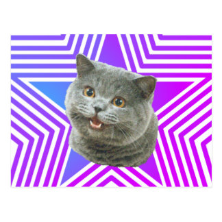 Cat Star Postcard