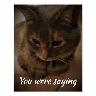 Cat staring at you poster
