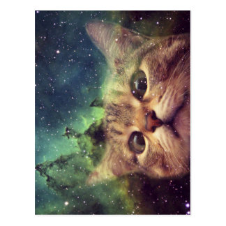 Cat Staring into Space Postcard