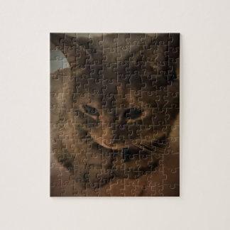 cat staring puzzle