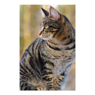 cat stationery