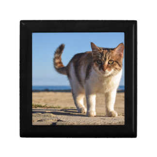 Cat Stray Animal Cute Young Face Eyes Beach Gift Box