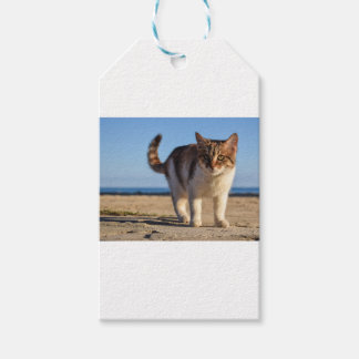 Cat Stray Animal Cute Young Face Eyes Beach Gift Tags