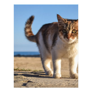 Cat Stray Animal Cute Young Face Eyes Beach Letterhead