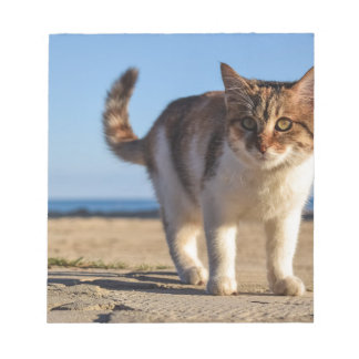 Cat Stray Animal Cute Young Face Eyes Beach Notepad