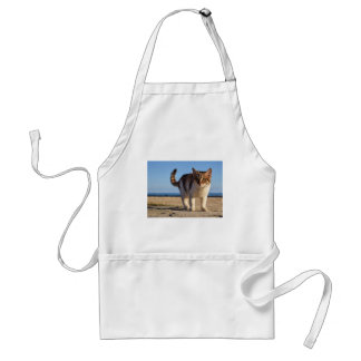 Cat Stray Animal Cute Young Face Eyes Beach Standard Apron