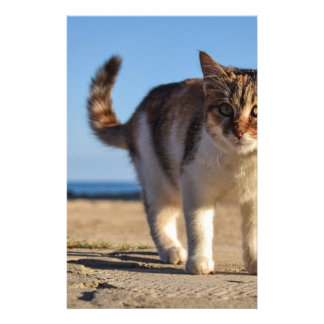 Cat Stray Animal Cute Young Face Eyes Beach Stationery