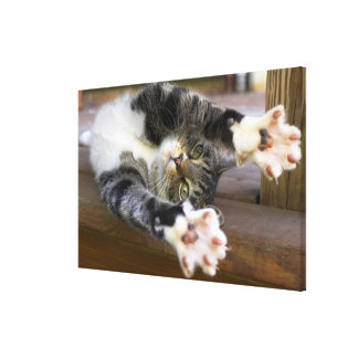 Cat stretching, indoors canvas print