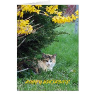Cat, Sweet One, Birthday Card
