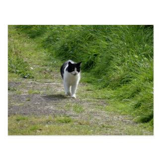 Cat taking a stroll postcard