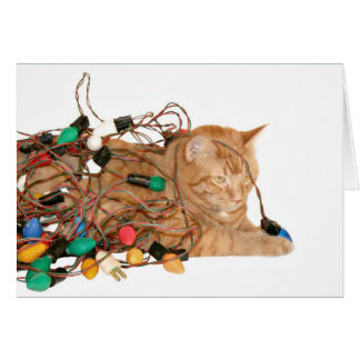 Cat tangled in Christmas lights Card