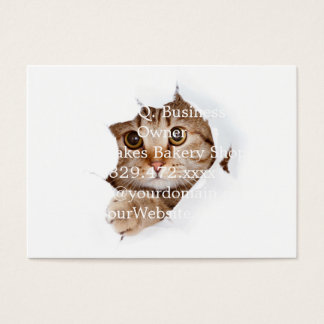 Cat tearing paper - looking cat - cute cats - pet business card