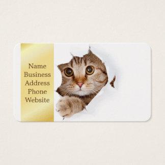 Cat tearing paper - looking cat - cute cats - pet business card