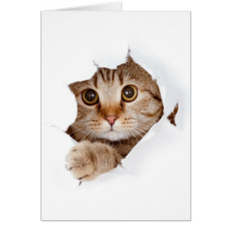 Cat tearing paper - looking cat - cute cats - pet card