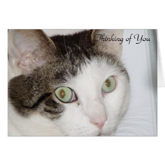 Cat - Thinking of You Card