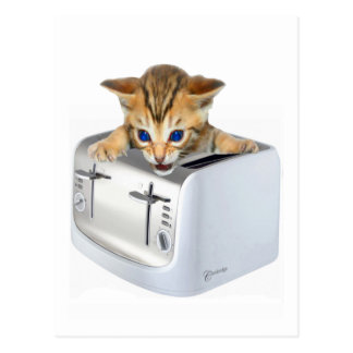 Cat Toaster Post Card
