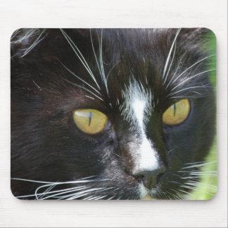 Cat Up Close Mousepad