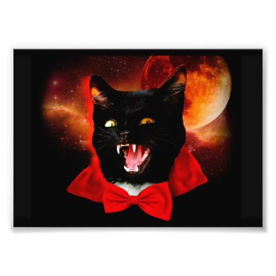 cat vampire - black cat - funny cats art photo