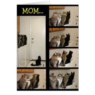 Cat vs. Fly Mother's Day Card