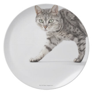 Cat walking plate