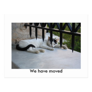 Cat  We have moved Post Card