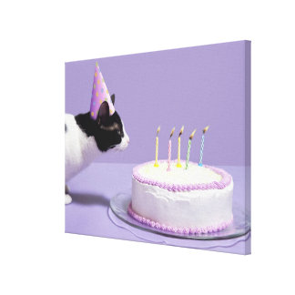 Cat wearing birthday hat blowing out candles stretched canvas prints