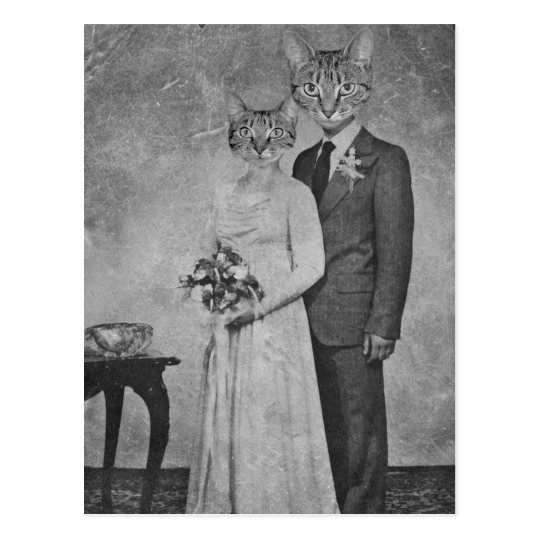 Cat wedding postcard