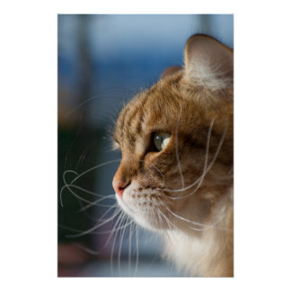 Cat whiskers in the sun poster