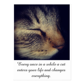 Cat White quote on Postcard