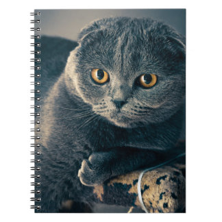 Cat With Amber Eyes Spiral Notebook