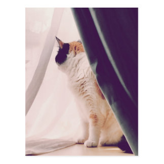 Cat with curtains postcard