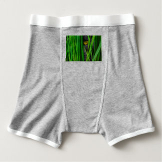 Cat with Green Leaf and Special Eyes Boxer Briefs